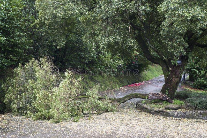 Les arbres de camélia font du jardinage à Soutomaior Espagne photo libre de droits
