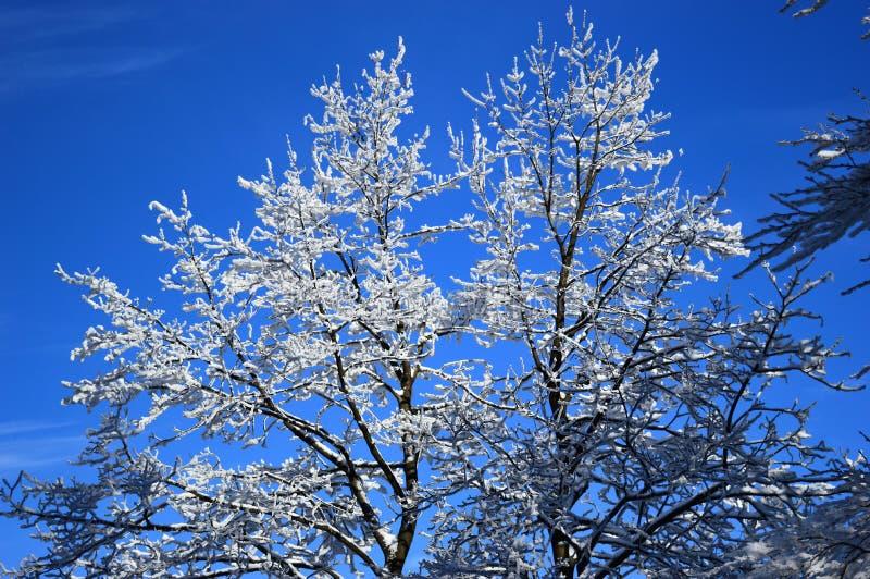 Les arbres de Milou image libre de droits