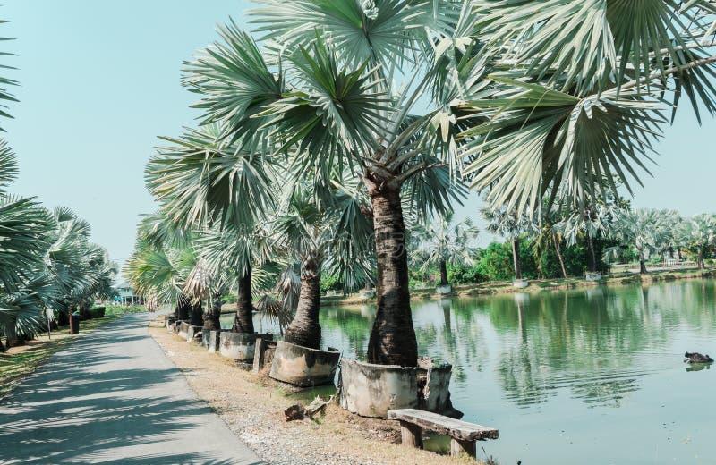 Les arbres de Pamirs mettent en parallèle la route et l'étang avec le skyin bleu le jardin images libres de droits