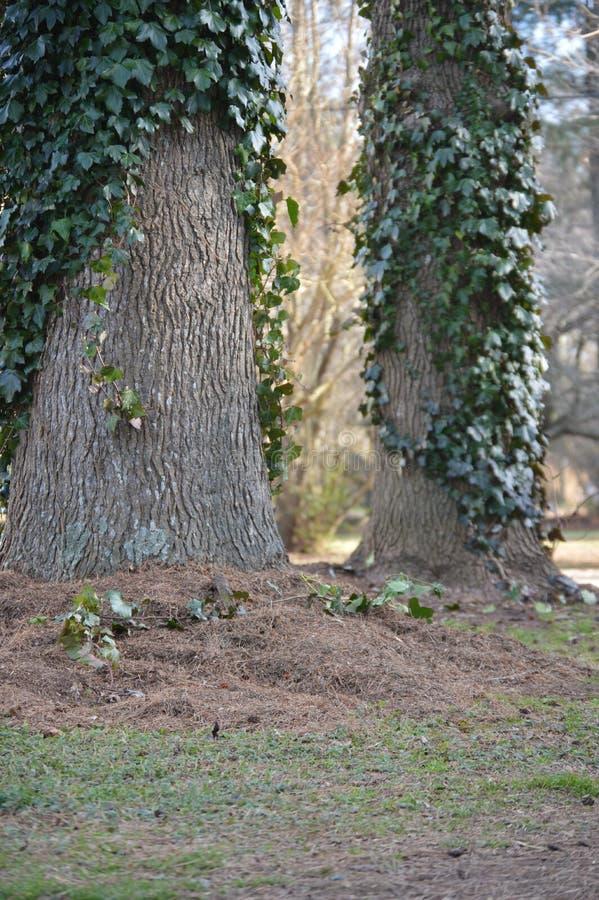 Les arbres de yard de grange photographie stock