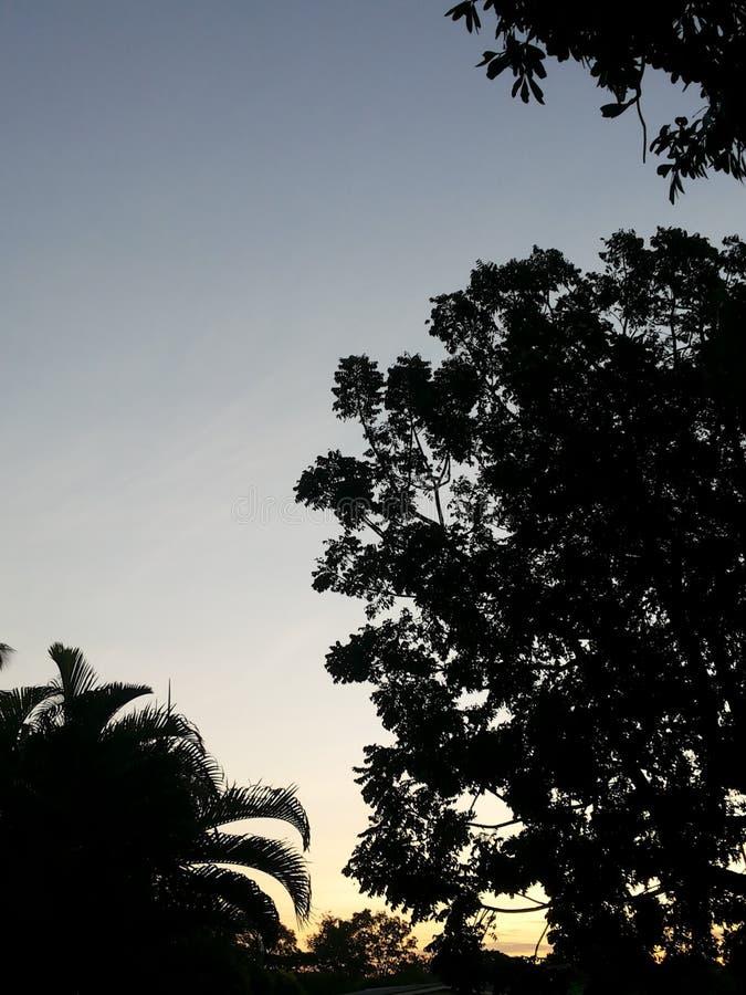 les arbres est noir image stock