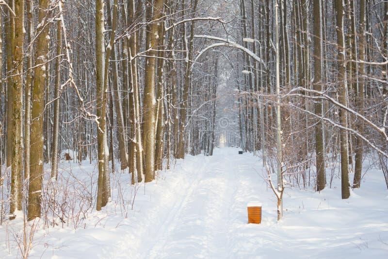 les arbres et les bancs couverts de neige dans la ville se garent photo stock
