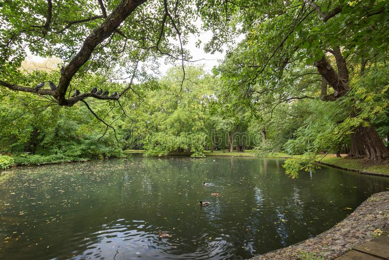 Les arbres et l'étang luxuriants chez l'Oliwa se garent image libre de droits