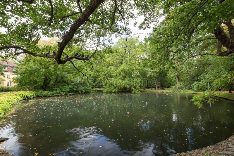 Les arbres et l'étang luxuriants chez l'Oliwa se garent images stock