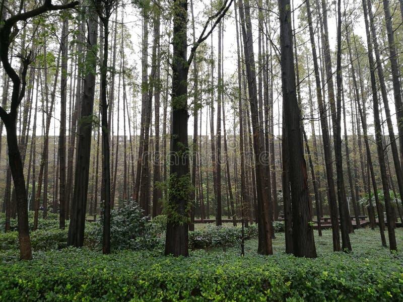 Les arbres et le mur photos libres de droits