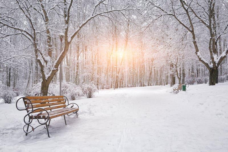 les arbres et les bancs couverts de neige dans la ville se garent photos libres de droits