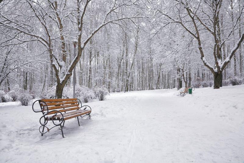 les arbres et les bancs couverts de neige dans la ville se garent images libres de droits