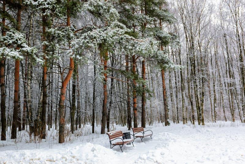 les arbres et les bancs couverts de neige dans le pin se garent photographie stock