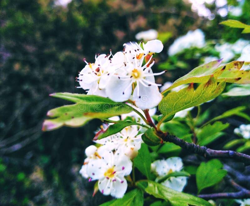 Les arbres fruitiers ont été répondus photo stock