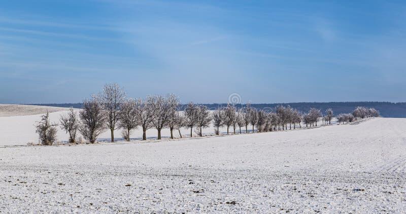 Les arbres glacials blancs dans la neige ont couvert le paysage photographie stock libre de droits