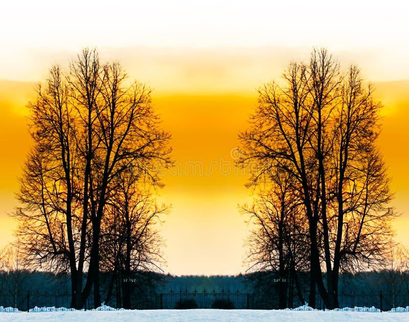 Les arbres nus. photo stock