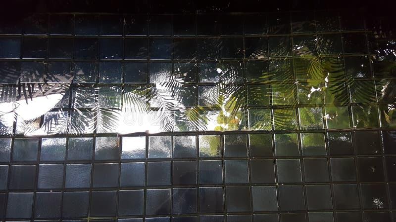 les arbres ont reflété l'image sur le fond de piscine fini par tuile photos stock