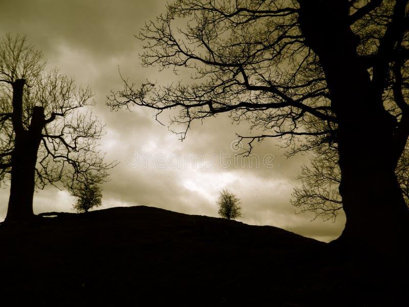 Les arbres s'accrochent au flanc de coteau images libres de droits