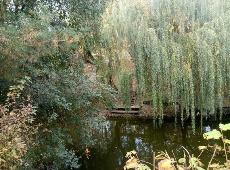 Les arbres s'approchent du fleuve photographie stock