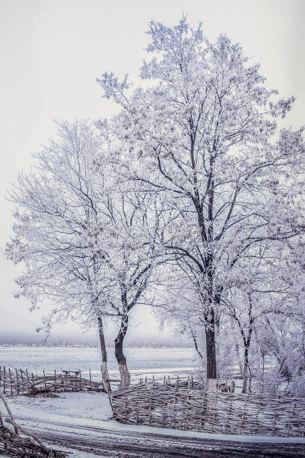 Les arbres sont couverts de gelée dans le domaine photo libre de droits