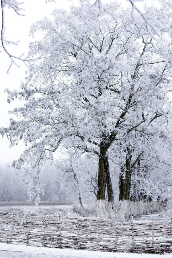 Les arbres sont couverts de gelée dans le domaine photographie stock