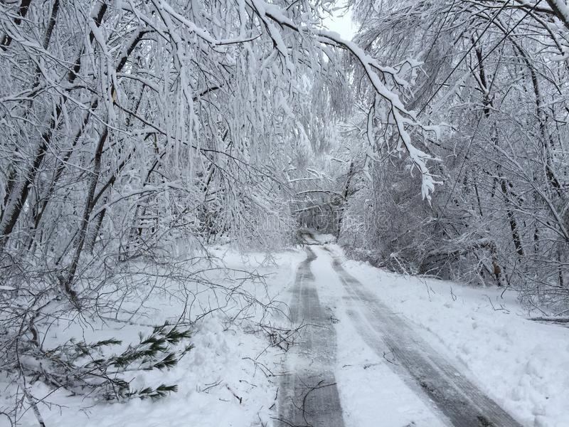 Les arbres tombés sur la route en hiver fulminent Quinn image libre de droits
