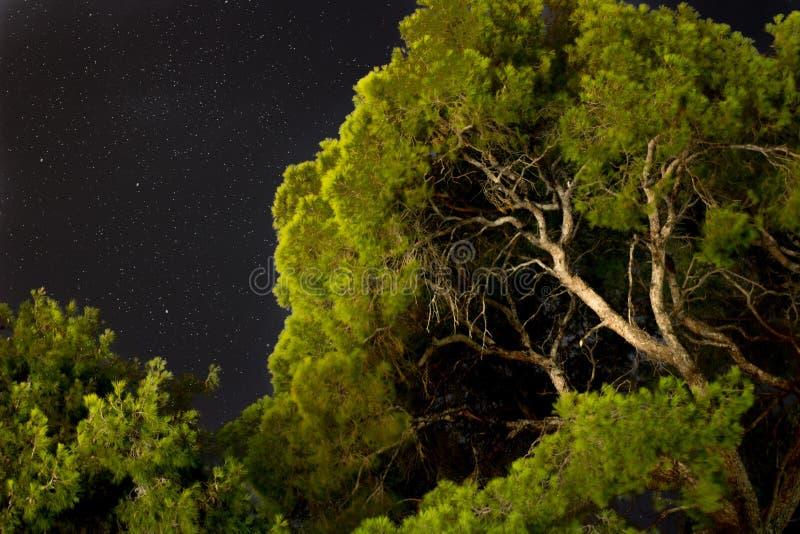 les arbres verts base vers le haut de la vue avec le ciel nocturne et les étoiles dessus images libres de droits
