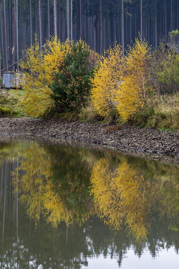 Les arbustes avec les feuilles multicolores se sont reflétés dans l'eau d'un petit étang image stock
