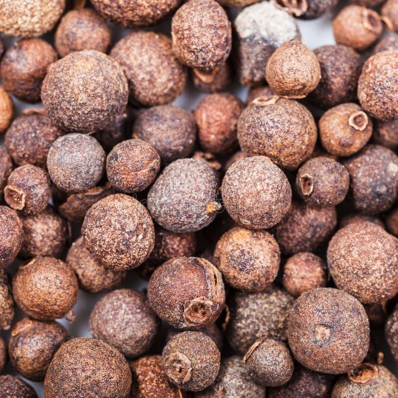 Les baies de toute-épice (poivre de Jamaïque) se ferment  image libre de droits