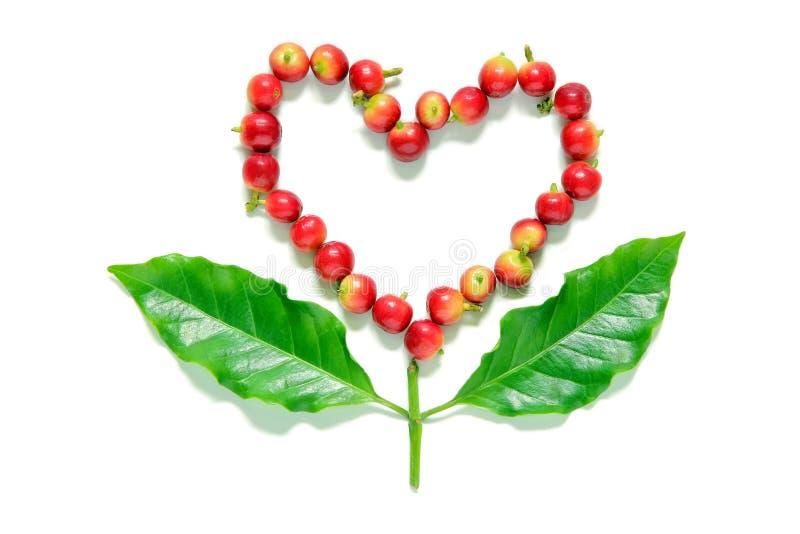 Les baies rouges de grains de café au coeur forment avec la feuille de café image stock