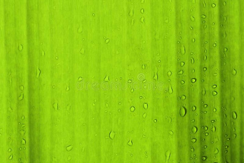 Les baisses de l'eau sur le vert laisse le baground photos stock