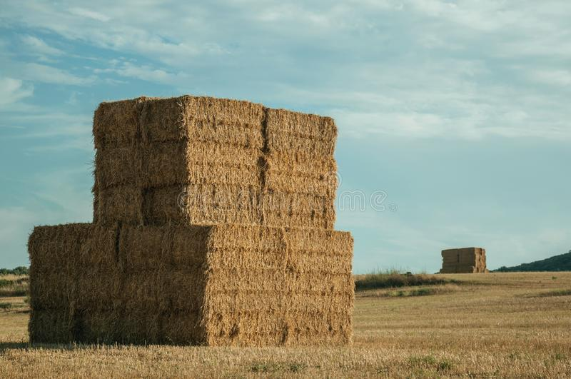 Les balles de foin ont empilé sur le champ dans une ferme photos stock
