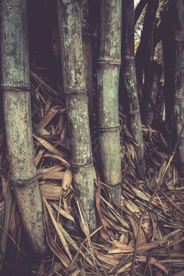 Les bambous chez Waeruwan font du jardinage en parc de PhutthamonthonBuddhist dans le secteur de Phutthamonthon, province de Nakh photo libre de droits