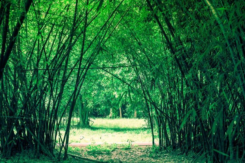 Les bambous percent un tunnel au jardin de Waeruwan en parc de PhutthamonthonBuddhist dans le secteur de Phutthamonthon, province images libres de droits