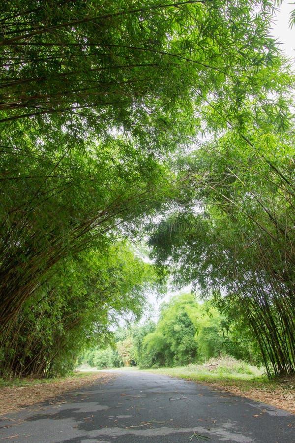 Les bambous percent un tunnel au jardin de Waeruwan en parc de PhutthamonthonBuddhist dans le secteur de Phutthamonthon, province image libre de droits