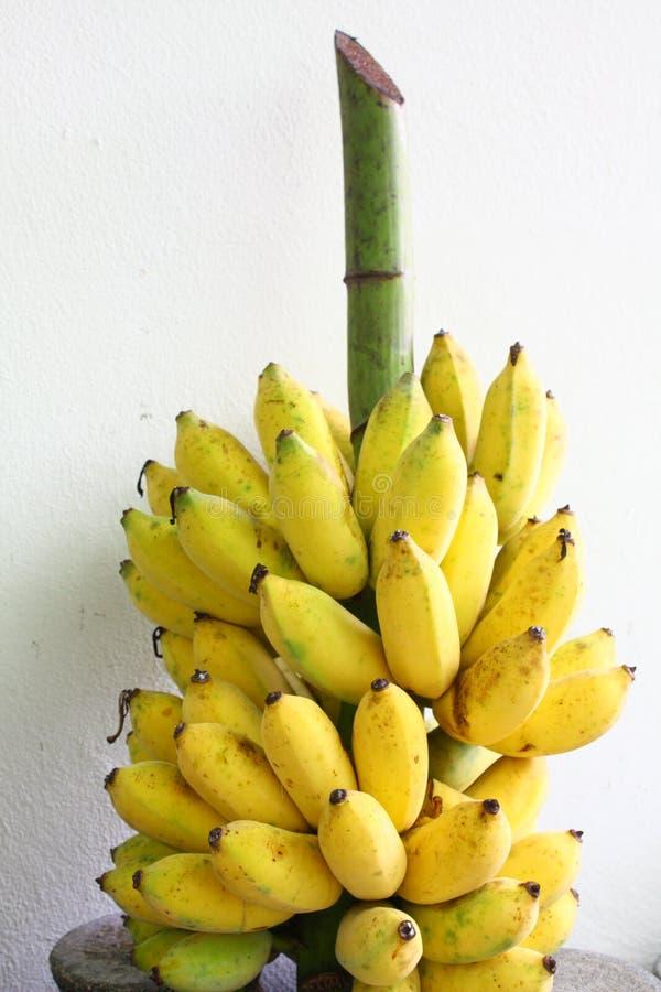 les bananes lient mûr photos stock