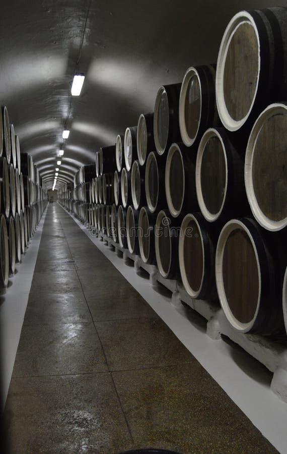 Les barils de chêne se situent dans les rangées dans la cave, le stockage et le vieillissement du vin photo stock