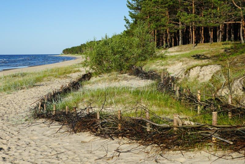 Les barrières en osier sur la plage pour la détention du mouvement de sable et de la réduction de l'homme ont fait des effets images libres de droits