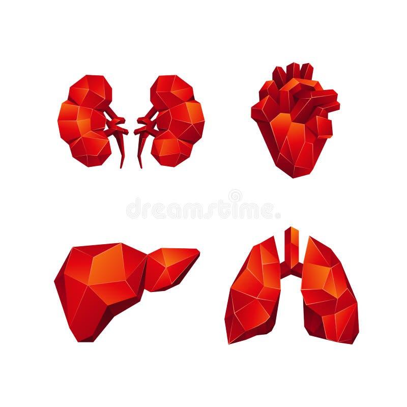 Les bas poly organes internes humains rouges ont placé sur un fond noir illustration libre de droits