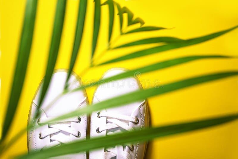 Les baskets blanches sont à l'ombre du palmier sur fond jaune photographie stock libre de droits