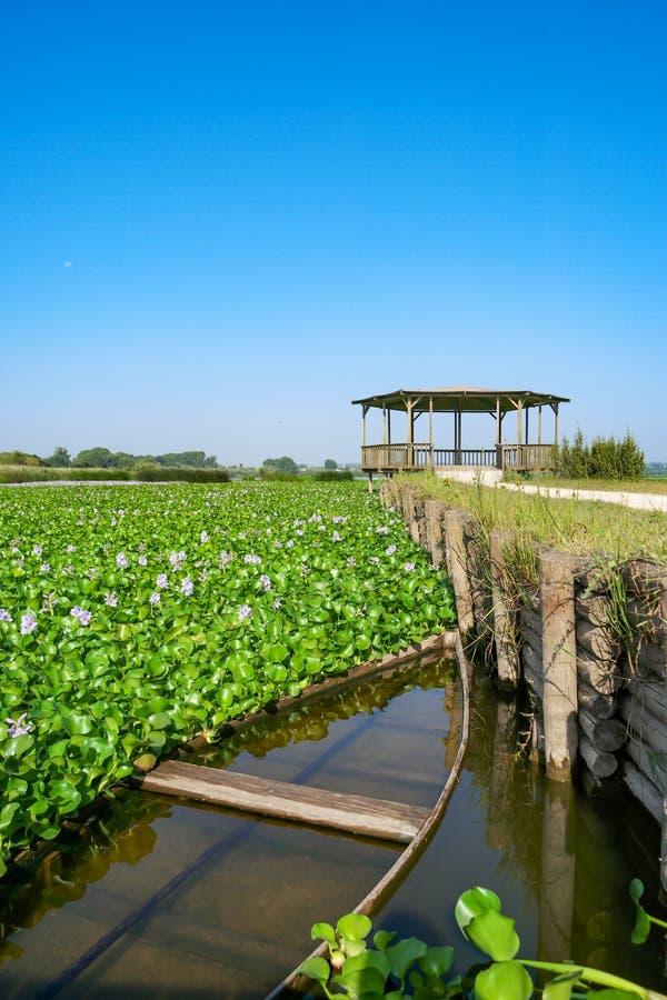 Les bateaux en bois de fond plat ont amarré à la marge de lagune de Pateira photos libres de droits