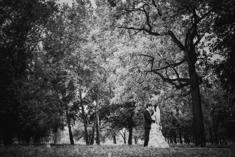Les beaux jeunes couples de photographie blanche noire se tiennent sur la forêt de fond image stock