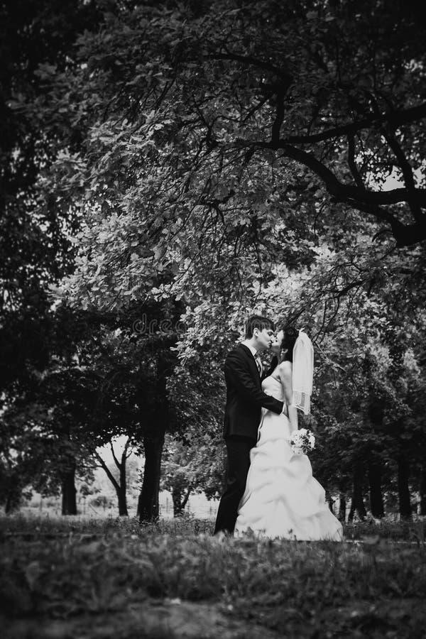 Les beaux jeunes couples de photographie blanche noire se tiennent sur la forêt de fond photographie stock