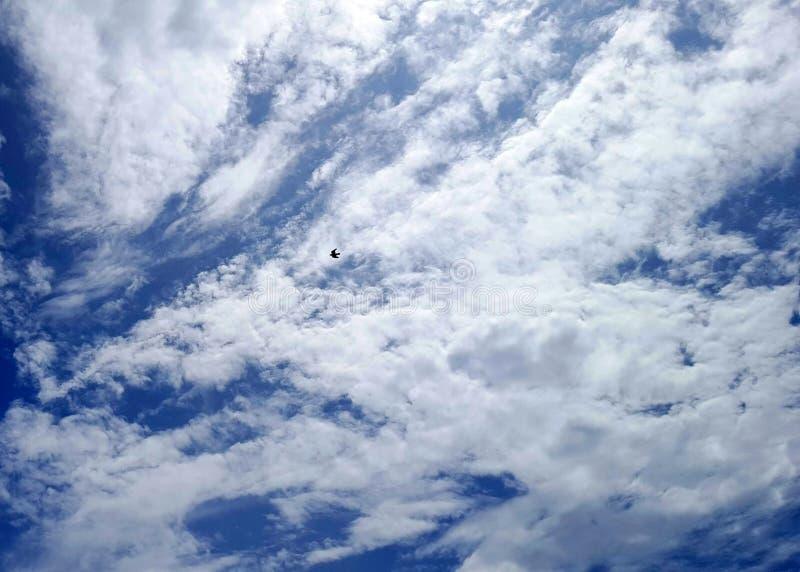 Les beaux nuages avec un oiseau dans le ciel photographie stock libre de droits