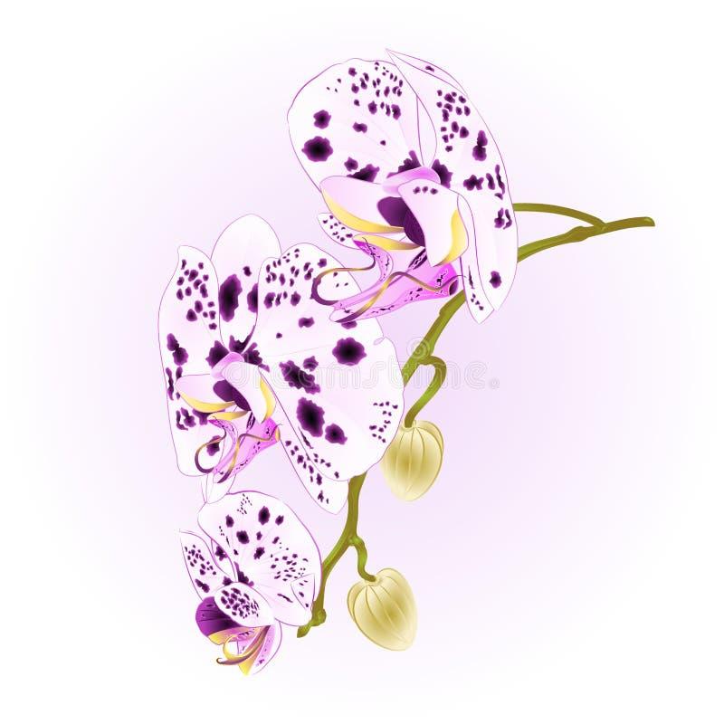 Les beaux points d'orchidée blancs et la tige pourpre avec les fleurs et le plan rapproché de bourgeons ont isolé le Dr. editable illustration de vecteur