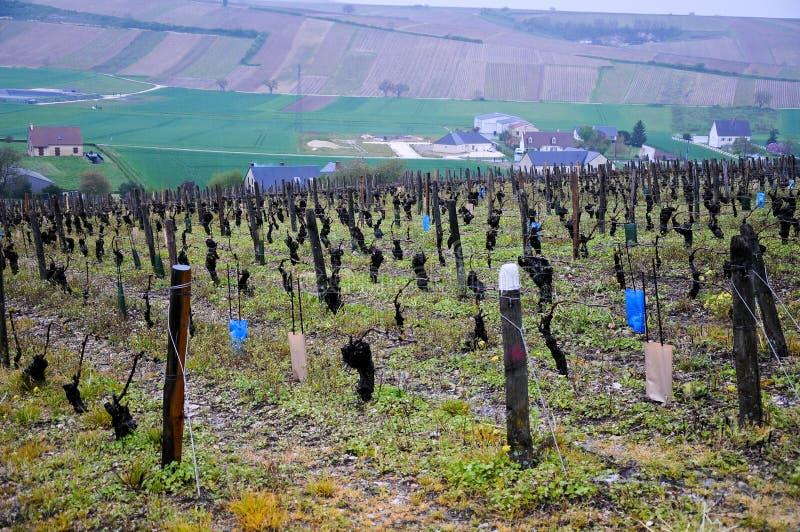 Download Les Beaux Vignobles Dans Le Sancerre Où Du Vin Est Produit, Franc Photo stock - Image du campagne, arbres: 76090538
