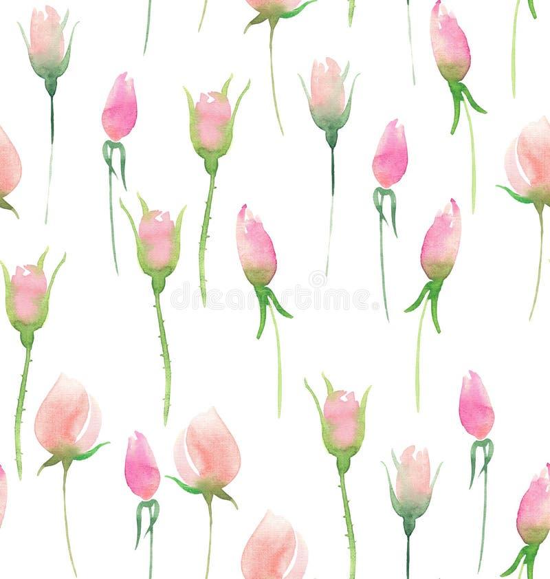 Les belles belles roses colorées florales élégantes mignonnes tendres sensibles de rose d'été de ressort bourgeonne et part du bo illustration de vecteur