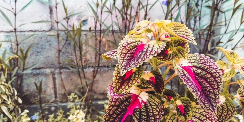 Les belles feuilles sont rouges, pour des milieux tels que des pages Web et également pour des milieux de médias de promotion photos stock