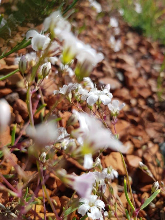 Les belles fleurs blanches image stock