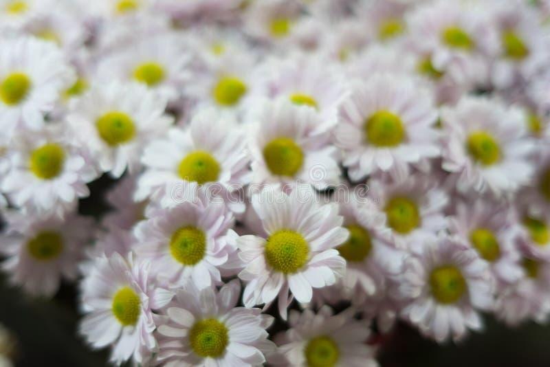 Les belles fleurs d'automne se ferment  images stock