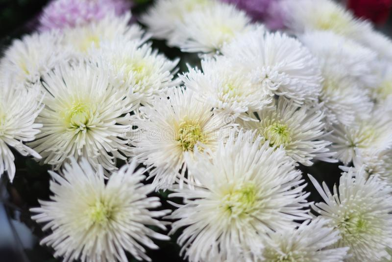 Les belles fleurs d'automne se ferment  photos libres de droits