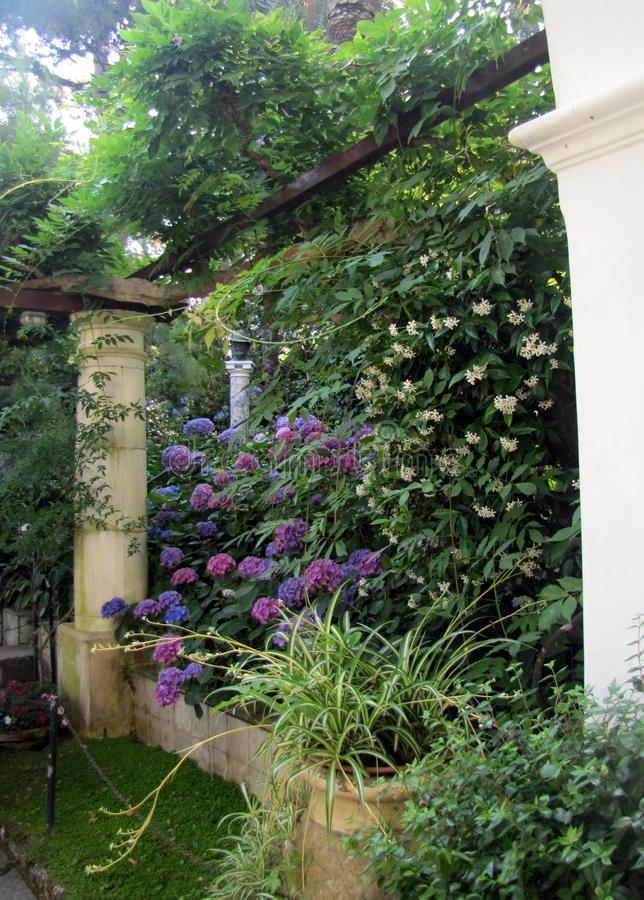 Les belles fleurs ornent les colonnes et les arcades d'Anacapri images stock