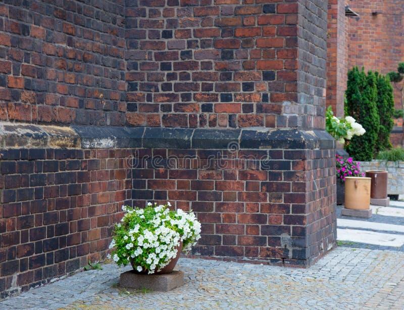 Les belles fleurs s'approchent du mur de briques rouge image libre de droits