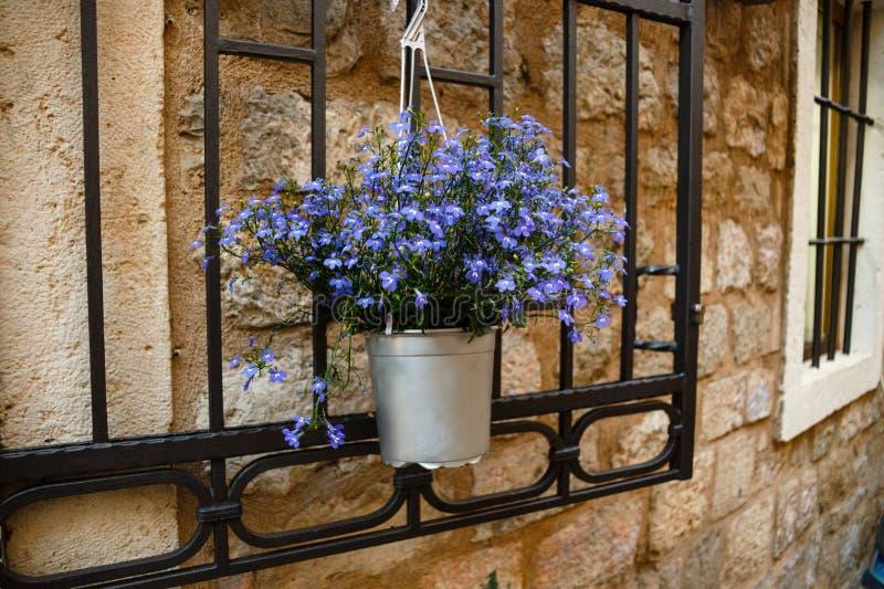 Les belles fleurs violettes dans le pot sur une fenêtre en métal gardent photos stock