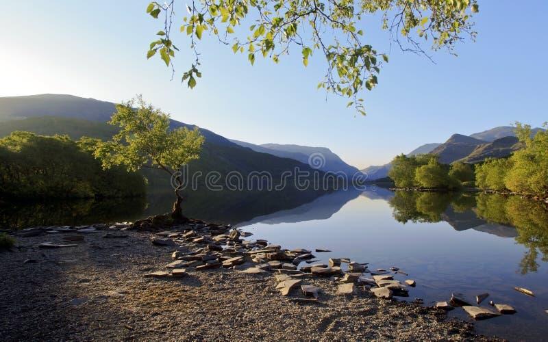 Les belles montagnes de Gallois se sont reflétées dans les eaux d'un distillateur du lac Llyn Padarn à l'arbre solitaire Llan Ber photo libre de droits